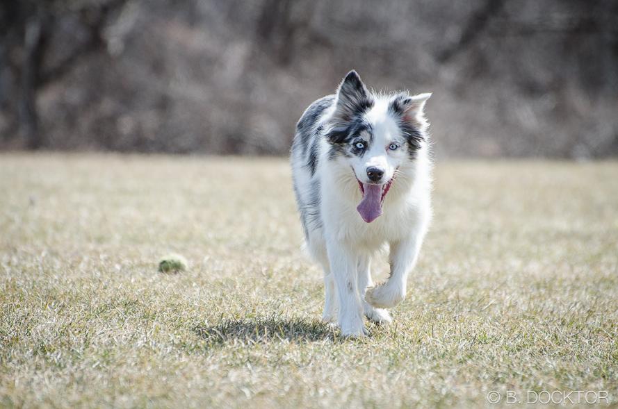 B. Docktor dog photographer-10