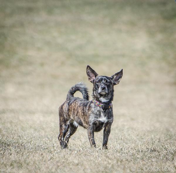 B. Docktor dog photographer-12