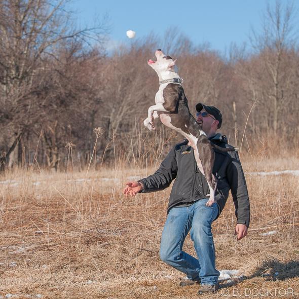 B. Docktor dog photographer-4