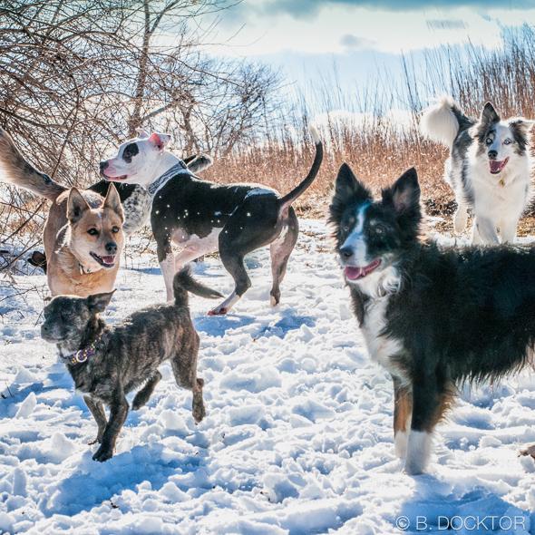 B. Docktor dog photographer-6