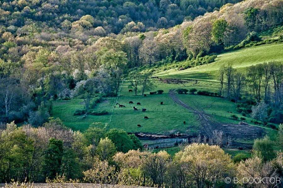 B. Docktor farm photographer-1