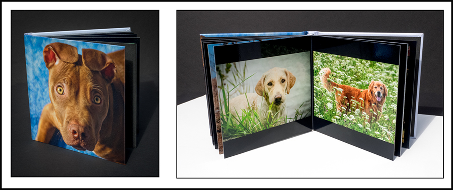 dog photography photo album by B. Docktor